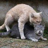 Le saviez-vous ? La Fondation 30 Millions d'Amis aide les villes à stériliser les chats errants