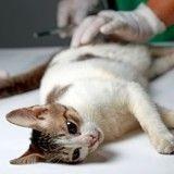 Pour encourager la stérilisation des animaux, un député propose une réduction d'impôt