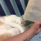 Harry Potter a sauvé ce chat aveugle !