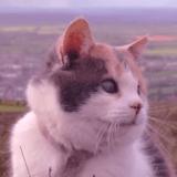 Stevie, le chat aveugle qui aime gravir des montagnes avec son humain (Vidéo du jour)