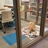 Tout ce que ce chien voulait, c'était qu'on lui lise une histoire…