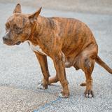 Dites «STOP» aux crottes de chien en réalisant votre propre campagne de sensibilisation !