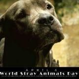 Demain, participez à la journée mondiale pour les animaux abandonnés