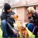 Ils sauvent des chiens dans l'un des quartiers les plus dangereux d'Amérique