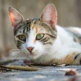 Elle retrouve son chat 8 ans après sa disparition