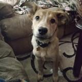 Ils adoptent un chiot abandonné et réalisent vite que le vétérinaire s'est totalement trompé à son sujet