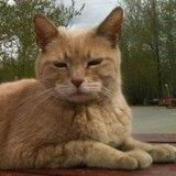 Insolite ! Ce chat a été maire d'une ville pendant près de 20 ans