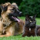 Le bien-être des chiens et chats, la priorité des Français ?