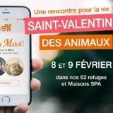 Saint-Valentin des animaux : la SPA ouvre ses portes aux coups de foudre les 8 & 9 février