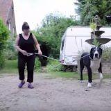 Elle adopte un Jack Russell mais le chien se transforme en Dogue Allemand…