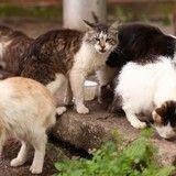 Comme un défi aux autorités, un couple de suédois recueille 100 chats