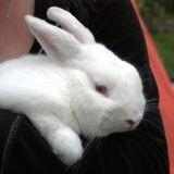 En Suisse les expérimentations sur les animaux ont augmenté