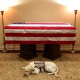 Le labrador de feu George Bush s'est recueilli auprès du cercueil de son maître