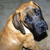 Une femme en colère après l'euthanasie de son chien dans une fourrière
