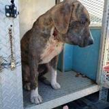 Le chien a du mal à respirer, quand les secours comprennent ce qu'il a autour du cou ils voient rouge