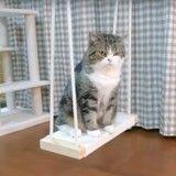 Maru, chat star acrobate et inséparable de sa balançoire ! (Vidéo du jour)
