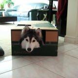 Tally, la chienne qui se prend pour un chat (Photos)
