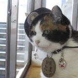 Des centaines de personnes assistent aux funérailles du chat Tama au Japon