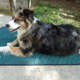 Des tapis pour rafraîchir les chiens !