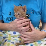 Ce chaton est le plus petit à avoir reçu une opération vitale