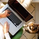 Télétravailler avec son chien ou son chat, un nouveau mode de bien-être au travail