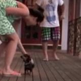 Le minuscule chiot qui voulait être bodyguard… (Vidéo du jour)