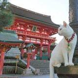 Au Japon, il y a enfin un sanctuaire pour vénérer les chats