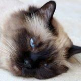Journée internationale du chat : pour 75% des Français, le bien-être de l'animal passe en premier par l'alimentation !