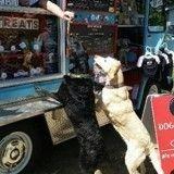Quand la mode des food trucks s'adapte aux chiens