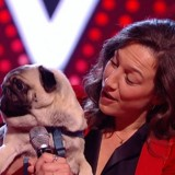 The Voice : un chien qui chante fait le buzz (Vidéo)