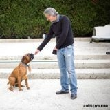 Happy Dog : Thierry Bedossa répond aux questions de Wamiz