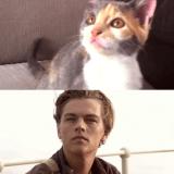Quand deux chatons rejouent les scènes cultes de Titanic !