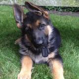 Suivez l'évolution d'un chiot de ses 2 mois à son 1er anniversaire (Vidéo du jour)