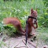 Abandonné, ce bébé écureuil a trouvé une nouvelle famille