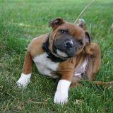 Comment bien enlever une tique à son chien ?