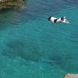 Ce chien qui plonge dans l'eau est très impressionnant (Vidéo du jour)
