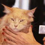 Le toilettage du chat : comment donner un bain à son chat ?