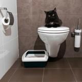 Apprendre à son chat à utiliser les toilettes: bonne ou mauvaise idée?