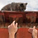 Coincée sur un toit, une chatte a été sauvée après plusieurs jours de détresse