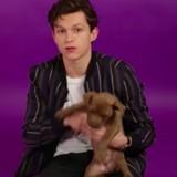Tom Holland alias Spider-Man répond à une interview entouré de chiots et c'est bien trop mignon (Vidéo)