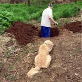 Il creuse la tombe de son chien qui est à côté, le vétérinaire arrive et prononce 2 mots qui changent tout