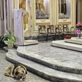 Ce chien se rend tous les jours depuis 2 mois à la messe : la raison va vous briser le cœur
