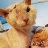 Défiguré à l'acide, ce chat miraculé s'en est sorti