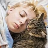 Votre chat est plus actif la nuit ? Voilà pourquoi !