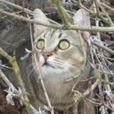 72h avant son euthanasie, ce chat a eu droit à une seconde chance !