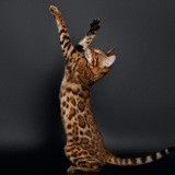 Apprendre des tours à son chat