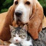Quelles sont les démarches à suivre en cas de décès de son animal ?