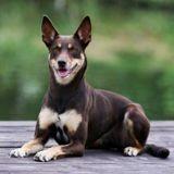 Elle perd son dentier, et son chien ne peut s'empêcher de sourire