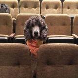 Ces chiens de service sont allés au théâtre et les photos font sourire