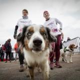 Wamiz Run 2019 : 5 bonnes raisons d'y aller !